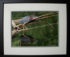 Framed Bird Print in Cumming, GA